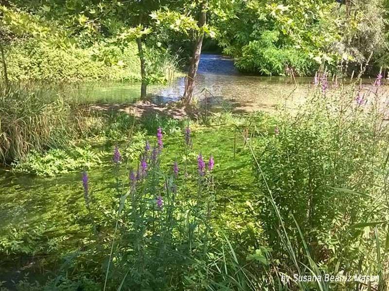 legambiente sernaglia oasi delle fontane bianche