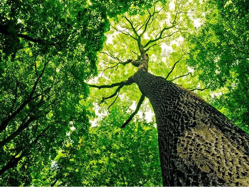 legambiente sernaglia festa degli alberi