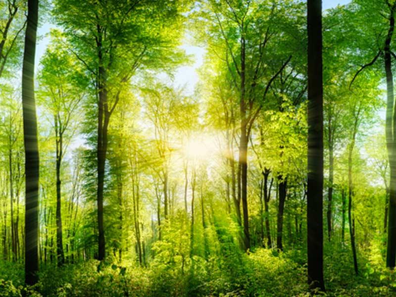 settimana degli alberi